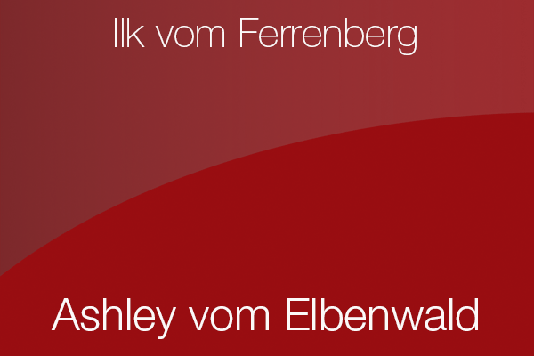Ashley vom Elbenwald x Ilk vom Ferrenberg